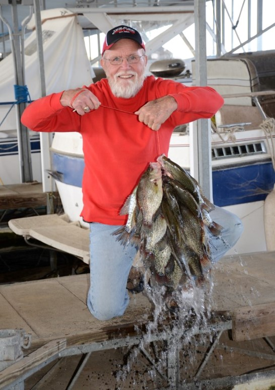This gentleman displays a good stringer of crappie caught from a dock. Look for brush and use light tackle.