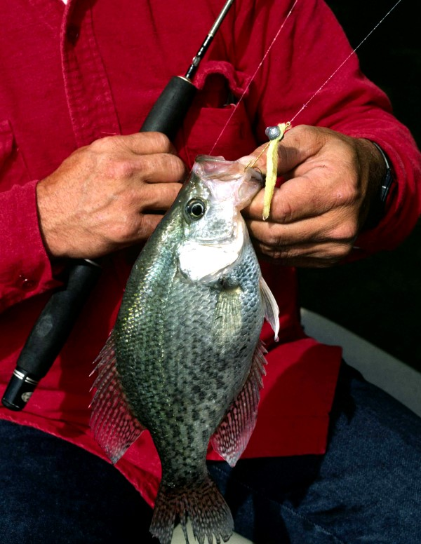 Tiny to larger jigs will work to catch deep crappie, with lightweight preferred when wind allows. Or, you can create your own rig.