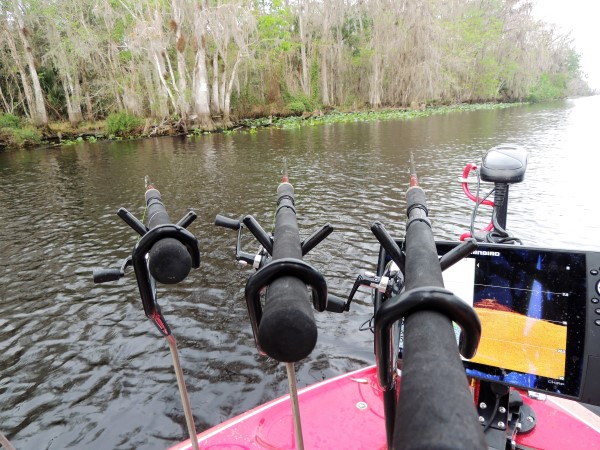 Spider rigging is a very effective method for catching crappie on the St. Johns River, but so is single pole jigging. Note the pads and cover along the shoreline just waiting to be dipped.