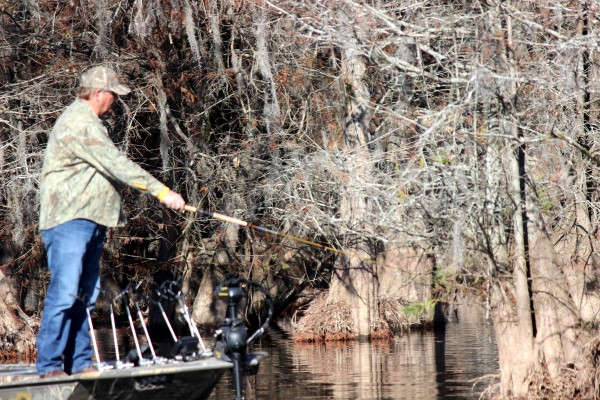 Whitey Outlaw single poles cypress trees in search of isolated spots holding crappie.