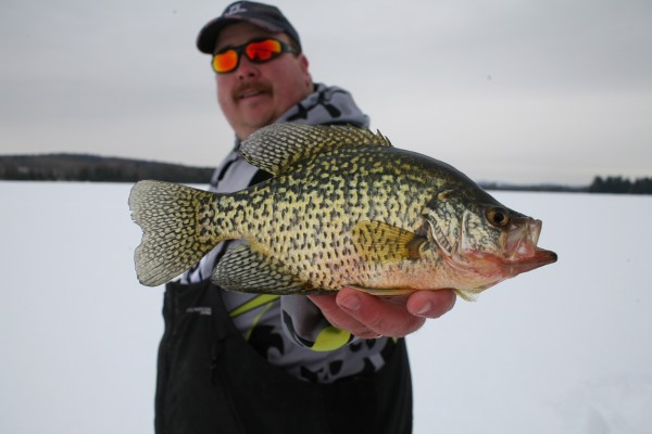 when a crappie comes out of the black do not change what you're doing. If jigging, continue to jig; if holding it still, remain still. Fish like this one will often take it.