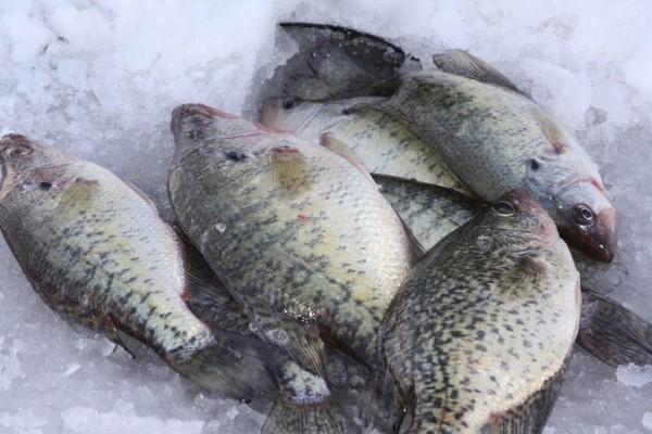 Fish & Herbs Recipe